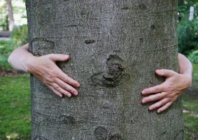 Baum umarmen, zwei Frauenhände umarmen einen dicken Baumstamm
