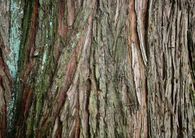 Nahaufnahme einer Baumrinde