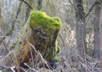 Baumstumpf mit hellgrüner Moosdecke im Wald