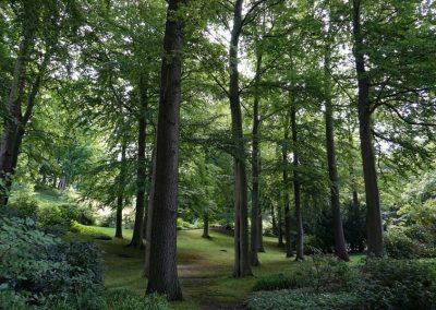 Laubwald, Waldstück im historischen Kurpark von Bad Malente in Schleswig-Holstein