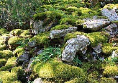 Moose und Farne auf Steinen, terrassenförmig aufsteigende Natursteine im Wald