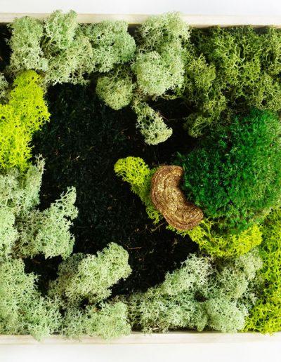 quadratisches Bild in hellem Holzrahmen, Moosbild Bild aus Islandmoos mit Baumpilz