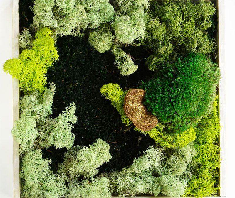 Moosbilder – natürliche Landschaften