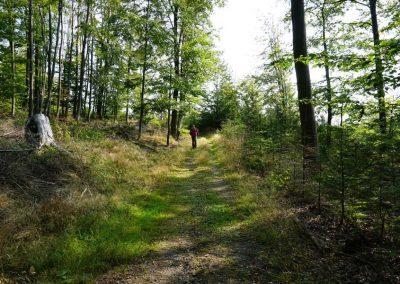 Waldspaziergang, Waldweg durch eine Lichtung