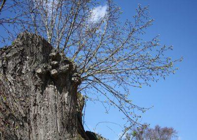 da wächst neues Leben auf einem alten Baumstumpf, Zweige ohne Blätter strecken sich in den blauen Himmel